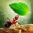 小蚂蚁部落安卓版